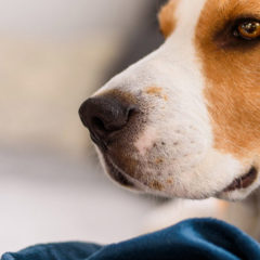 Dog friendly luxury apartments